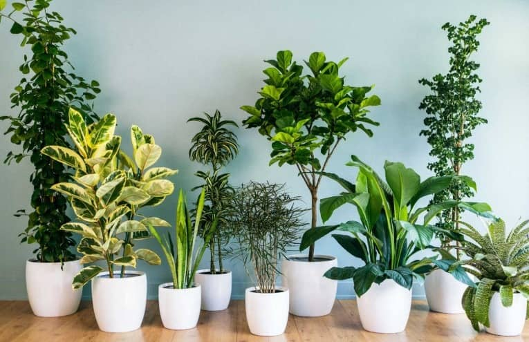 Indoor Plants Online Patterson Lakes